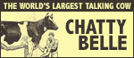 Chatty Belle - The World's Largest Talking Cow